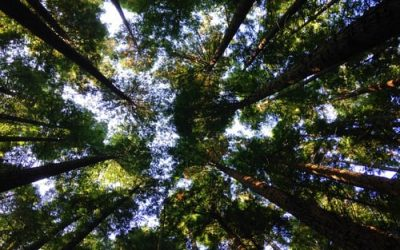 Environmental claims: how to avoid falling foul of the ASA or CMA